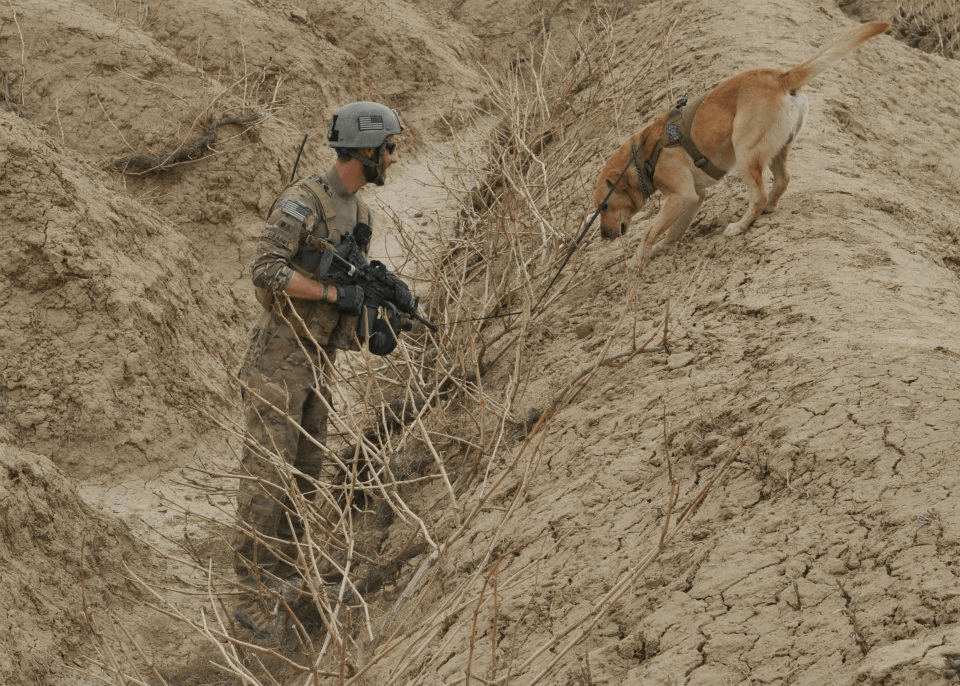 U.S. Army Sergeant John Nolan and Specialized Search Dog Honza, Afghanistan 2011. (pictured provided by Sergeant Nolan)