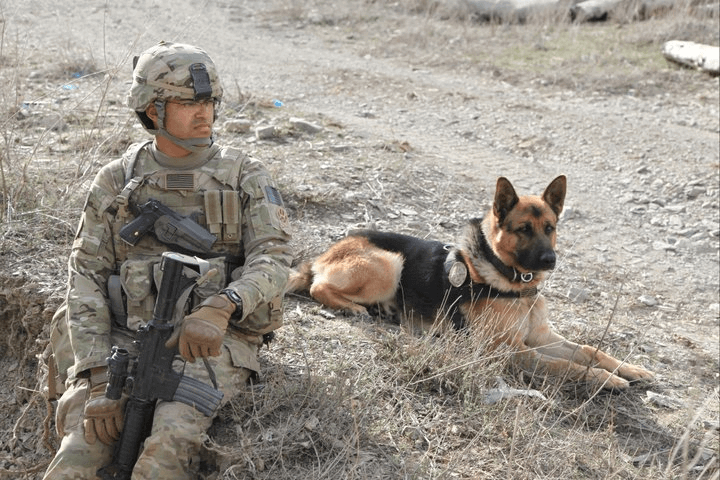 U.S. Army Specialist Marc Whittaker and Military Working Dog Anax, Afghanistan 2010. (Photo provide by U.S. Army Specialist Mark Whittaker)