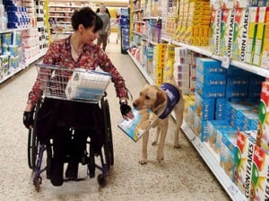 service-dog-shopping